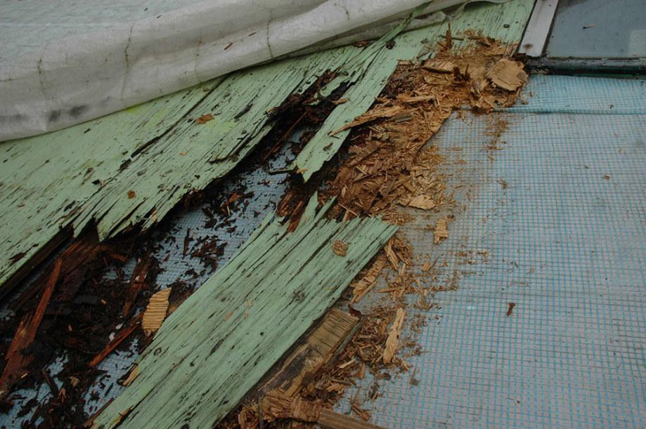01-parasite-qi-renovatie-hout-is-rot